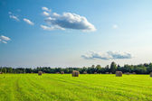 Rural landscape with a field and hay — Stock Photo