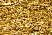 Background from  texture of straw — Stock fotografie