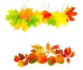 Folhas de outono isoladas em um fundo branco — Foto Stock