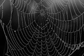 Black and white background from a web with water drops — Stock Photo