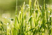 Green background from a grass on a lawn — Stock fotografie