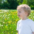 Small child on a meadow with dandelions — Stock Photo
