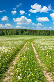 Summer rural landscape with a  the road — Stock Photo