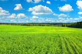 Summer rural landscape with the blue sky, clouds and field — Stock Photo