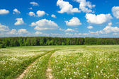 Summer rural landscape with a blossoming meadow — Stock Photo