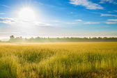 Summer  landscape with a field, sunrise and fog — Stock Photo