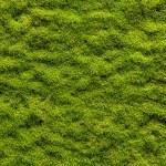 Moss texture — Stock Photo #33285505