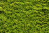 Moss texture — Stock Photo
