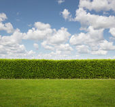 Back Yard, close up of hedge fence on the grass with copy space — Stock Photo