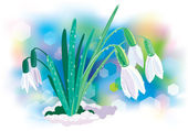 Snowdrop — Stock Vector