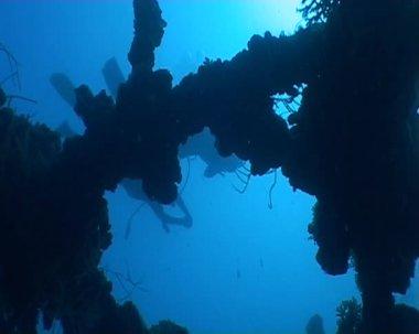 Tauchen unterwasser video — Stockvideo