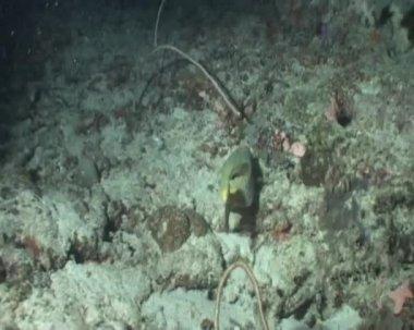 Fish underwater diving video — Stock Video