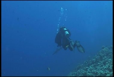Shark underwater diving video — Stock Video