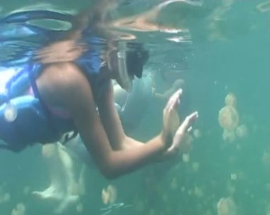 Underwater diving video — Stock Video