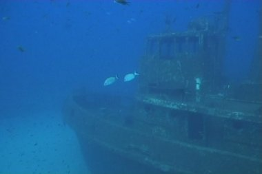 Ship wreck underwater diving video — 图库视频影像