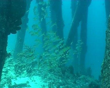 Fish underwater diving video — Vidéo