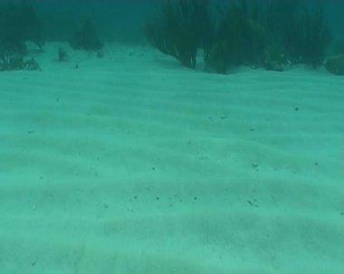 Caribean Sea Life — Stock Video