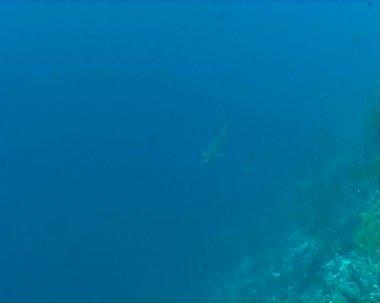 Shark underwater diving video — Stock Video