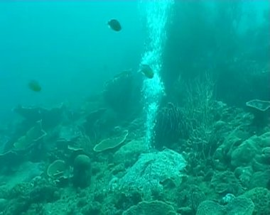Bubbles diving underwater — Wideo stockowe