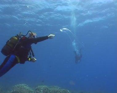 Medusa underwater diving video — Stock Video