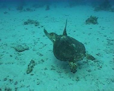 Turtle underwater diving video — Stock Video