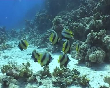Underwater diving video — Stockvideo