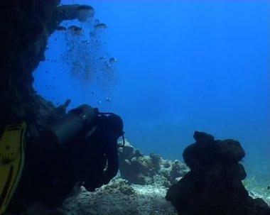 Underwater diving video — Stock Video