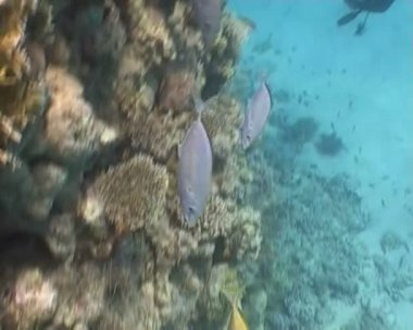 Fish underwater diving video — Stock Video