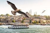 Racky letící na zlatý roh v istanbulu — Stock fotografie