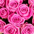 Natural pink roses — Stock Photo