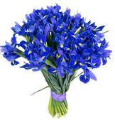 Bouquet of blue irises — Stock Photo
