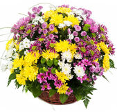 Natural colorful asters in a basket — Stock Photo
