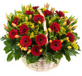 Natural red gerberas and tulips in a basket — Stock Photo