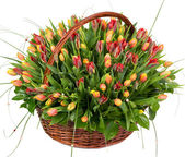 Natural tulips in a basket — Stock Photo