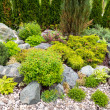Natural landscaping in home garden — Stock Photo