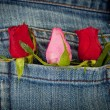 Roses in pocket — Foto Stock