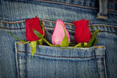 Roses in pocket — Stock Photo