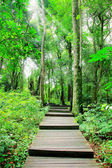 путь в форест-парк — Стоковое фото