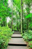 Traject in het forest park — Stockfoto