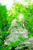 Bosque — Foto de Stock