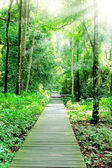 Walking in the forest park — Stock Photo