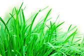 Hierba verde sobre fondo blanco — Foto de Stock