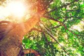 Die schönheit der bäume im wald — Stockfoto