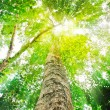 Stock Photo: Sun light top of mature trees