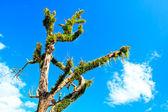 青い空を背景に美しいツリー — ストック写真