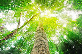 Sun light top of mature trees — Stock Photo