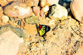 Small butterfly on stone — Stockfoto