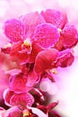 Flower orchids — Stock Photo