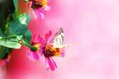 Butterfly on flowers — Foto de Stock