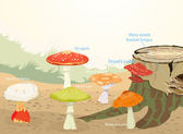 Types of Mushrooms — Stock Vector
